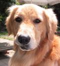 営業犬「ガクコ」